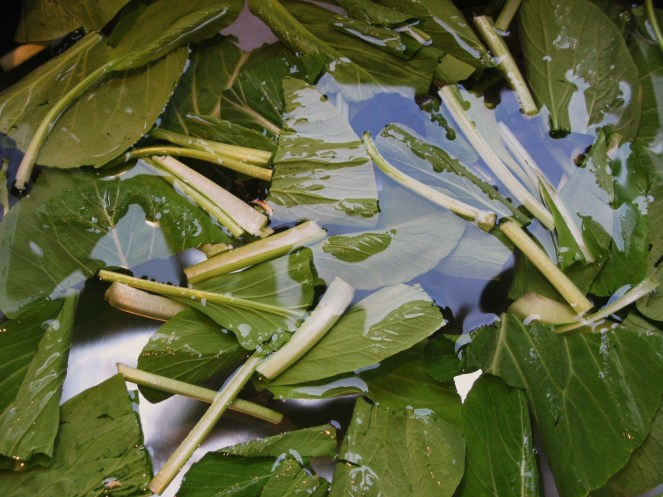 Fig. 2 Choi Sum in pieces soaked in water