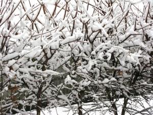 Snowy day in Duggingen 10 dec 2008