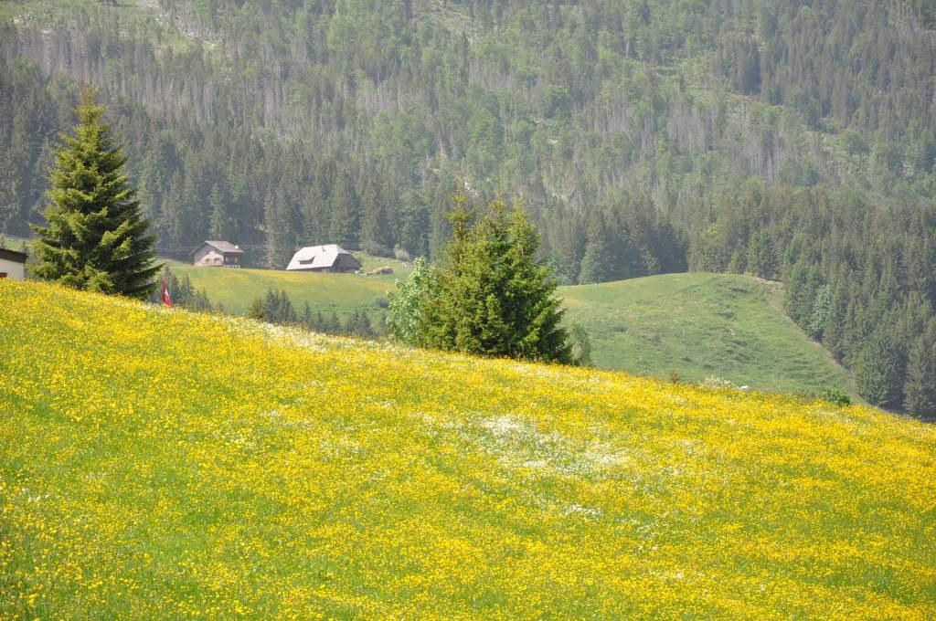 Soerenberg (bobsleigh)